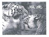台州市路桥金凤扑克牌商标