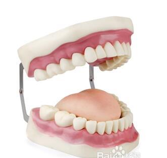 假牙应注册到第几类商标类别上?